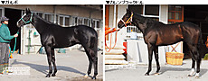 Photo01_2